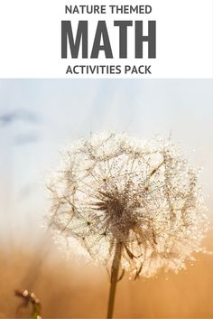 nature themed math activities Preschool Math Games, Math Activities For Kids, Preschool At Home, Montessori Activities, Fun Math, Number Activities, Montessori Education, Preschool Ideas, Maths