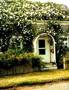 Seldom Inn (Desiree Paquette), available online at Fine Art America. #Nantucket