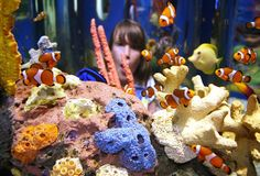 Nemo at Ripleys Aquarium of the Smokies