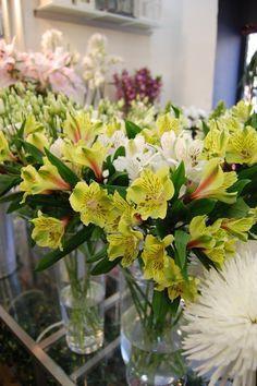 Alstroemeria en amarillo y blanco #alstroemeria #floristería #flores