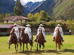 Peruvian Paso Horses | Peruvian Paso horses, Urubamba Valley, Peru - GTH