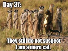 Top 30 Funny animal Memes #Funny #Quotes