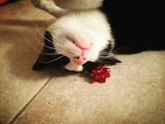 Modern Cat's Photo Contest - Rue