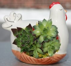 Mini Succulent Gardens - Playful Collection of Animal Planters w/Distinctive Succulents