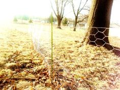 Chicken wire + plant stakes = a temporary fence so the dogs can roam as they wish in the yard before a real fence is built. Not recommended for large dogs, but works great with small ones!
