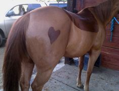 #HorseClipping Horse Clipping, Donkey, Horses, Tips, Animals, Animales, Animaux, Donkeys, Animais