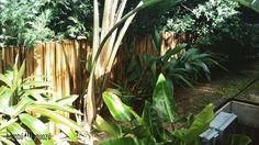 Cerco de Bambú Dorado trabajo de hoy con @pastopaisajismo