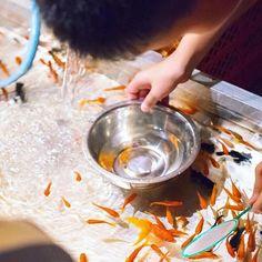 金魚すくい。  #長岡天満宮 #長岡京市 #京都 #お祭り #祭 #夏祭り #金魚 #金魚すくい #カメラ部 #写真好きな人と繋がりたい #α7ii #kyoto