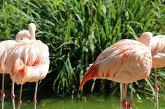 https://flic.kr/p/DETVB4 | flamingos from Warsaw Zoo