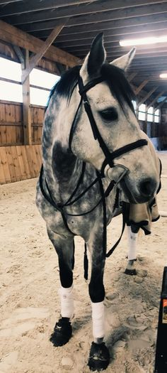 6280d95b28a  horseriding  horserider  equine