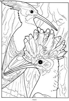 1000 Images About Vogels Uilen Enz On Pinterest