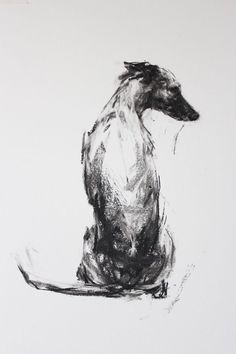 """""""The Sitting Whippet"""" charcoal on paper by Justine Osborne"""