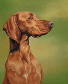 I Hope This Is OK To Share Am Owned By A JRT But Would Love Vizsla The Orange Dog Rocks