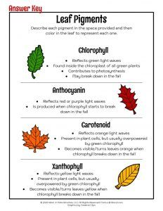 Why Do Leaves Change Colors in Autumn   Woo! Jr. Kids Activities Science Activities, Classroom Activities, Activities For Kids, Teacher Worksheets, Worksheets For Kids, Autumn Leaf Color, Autumn Leaves, Home Learning, Early Learning