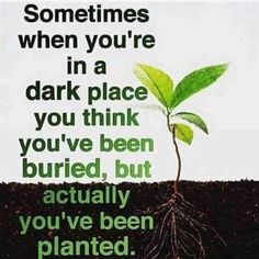bloom where you are planted...