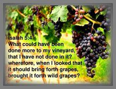 Isaiah 5:4 Book Of Isaiah, Vineyard, Bring It On, Fruit, Vineyard Vines