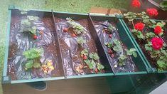 Actividades de jardinería en el contexto del centro de día y rehabilitación