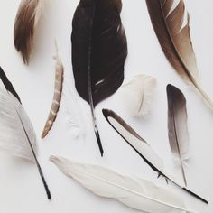 A light wind swept through the sky, sweeping the feathers from their hallowed corners, gripping them before they fell and delivering them to a new home.