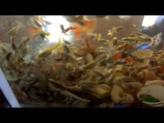 aquarium for all fish blogspot#Fish #FishTank #TropicalFish #Fishing #NomCat #Salmon #Aquarium #Health #Food #Healthy #Seafood #Heart #HealthyLiving #FishTank #HeartHealth #Recipe #FlyFishing #TropicalFish #HealthyEating #Trout #Goldfish #Cooking #Water #Goldfish #Water #Saltwater #Vancouver #Dubai #NomCat #MontereyBayAquarium #SeaLife #UAE #fish #aquarium #fishtank #swim #swimming #water #coral #reef #reeftank #tropical #koi #saltwater #freshwater #beautiful #ocean #watertank #blueoranda…
