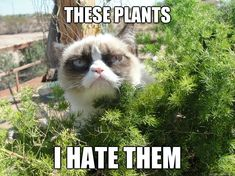 Pretty much how I feel about *every* plant when spring/summer rolls around.  #allergies
