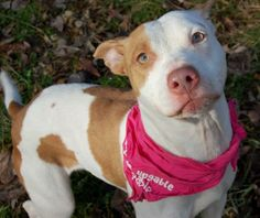 Sweet Tea is a great dog. She is very friendly and lovable. Outside of her cage she is really good. When going on walks she does pull on the...