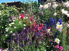 Annie's Annuals: The Ultimate Plant Road Trip - Make sure to visit GardenAnswers.com and download our free plant idenfication app.