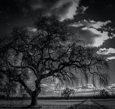 Tree Time.  . .