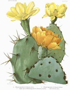 Desert Cactus Poster, Cactus Print, Yellow Cactus Blossom, Botanical Art Print…