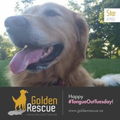 Sunshine is the best medicine, wouldn't you agree? 🥰 Happy #tongueouttuesday #adoptdontshop #goldenretriever #rescuedog We Are Golden, Rescue Dogs, Adoption, Sunshine, Tuesday, Medicine, Animals, Foster Care Adoption, Animales
