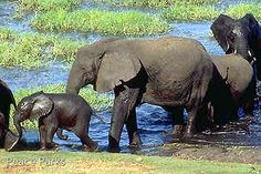 Formerly known as Maputo Elephant Reserve