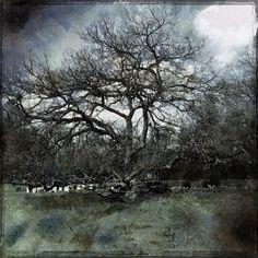Tranquility - Vivi Hanson Sacerdote