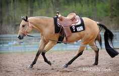 love the colors of the tack with the buckskin
