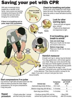 Saving your pet with CPR Infographic; my dog literally just got a stick stuck in her throat an hour agao and at first I thought I was going to have to give her the heimlich and I had no idea how.  This must be a message that this came up as the most recent pin on my page.
