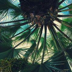 And then from underneath Tree Of Life, Holiday Travel, Life Is Beautiful, Palm Trees, Plant Leaves, Places To Go, Succulents, Tropical, Vacation