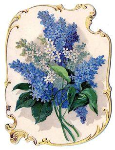70255544_flowerslilacsgraphicsfairy008bb.jpg (537×699)