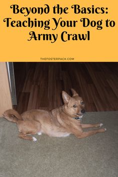 Dog Training Classes, Dog Training Videos, Training Your Dog, Training Online, Training School, Training Schedule, Training Collar, Hypoallergenic Dog Food, Dog Minding