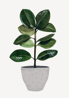 Ficus by Hermano Gato Plant Painting, Plant Drawing, Painting Collage, Plant Art, Collage Collage, Collage Ideas, Gouache Painting, Plant Wallpaper, Iphone Wallpaper