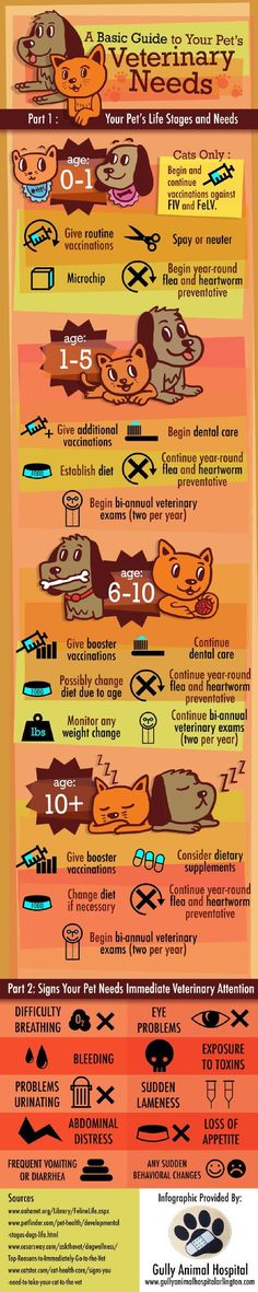 Our pets are a part of our families so we have to treat them that way and that includes taking care of your pet's health by making regular trips to your Veterinary. This infographic provides a timeline for both cats and dogs so you know when to take Rex or Fluffy for their next vet appointment. Making sure your pets are properly taken care of is important and this pet infographic is a good checklist to go by. Keep your animals safe and healthy.: