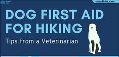 it's your absolute responsibility to take care of your pet in every possible way with basic dog first aid while hiking. A DIY kit can come a long way. Hiking Tips, First Aid, Take Care Of Yourself, Feel Better, Your Pet, Infographic, How Are You Feeling, Kit, Feelings