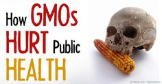 Philip J. Landrigan and Charles Benbrook published a paper in the New England Journal of Medicine on the topic of GMOs, herbicides, and public health.