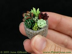 "polymer clay succulent garden I made this   teeny weeny succulent garden to go inside the miniature macrame plant hanger I   made from the book Microcrafts. See my book review on my blog :) It's less than   1"" diameter, and all colour-mixed polymer clay - no paint!"