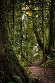 Moss.......(by b_ina)