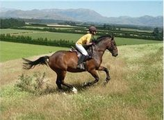 Great farm trekking Great farm trekking SlideShow Horseback riding holidays in New Zealand, Oxford, New Zealand Horseback Riding Riding Hats, Horse Riding, Equestrian Outfits, Equestrian Style, Equestrian Fashion, Riding Holiday, New Zealand Holidays, Types Of Horses, Wild Horses