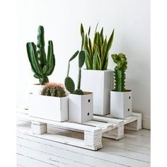 white hipster Interior garden decor plants minimal minimalist cactus... ❤ liked on Polyvore featuring home, home decor and floral decor