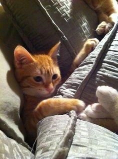 orange kittens are my cat weakness