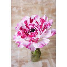 Ranunculus * 手の平広げたくらいの大きさです * * #DECOClayCraftAcademy  #decoclay #decoクレイクラフト #deco #clay #クレイ #claycraft #ラナンキュラス #ranunculus #handmade #粘土 #手作り #デコクレイ #花 #flower #pink #シャルロット #習い事