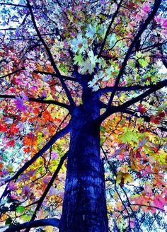 Twitter / NaturPictures: El Árbol del arco iris.. ...