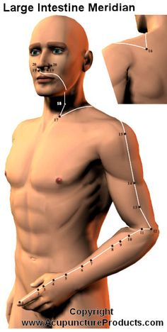 Acupuncture Large Intestine Meridian