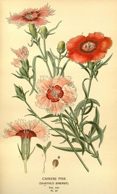 Favourite flowers of garden and greenhouse-London and New York