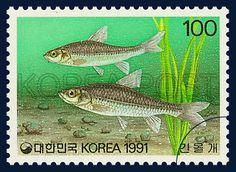 THE FISH SERIES 6,squalidus gracilis majimae, marine life, green, gray, 0991 06 08, 어류시리즈(여섯번째묶음), 1991년 06월 08일, 1646, 긴몰개, postage 우표